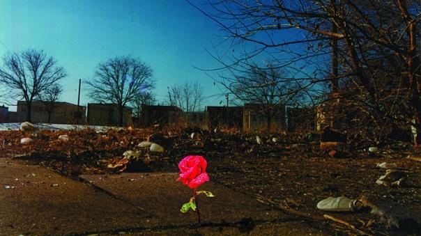 Rose that grew through the concrete Brandon Byrge 5