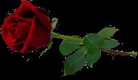 Rose that grew through the concrete Brandon Byrge 6