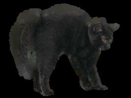 black_cat_halloween_png_by_lg_design-d5i24vf (1)