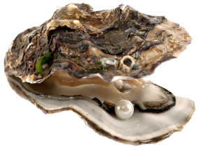 Oyster 11