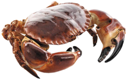 Dont Be A Crab