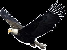 Eagle Brandon Byrge 1