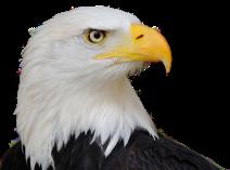 Eagle Brandon Byrge 2