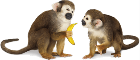 A Ladder A Banana and 5 Monkeys Monkeys Brandon Byrge