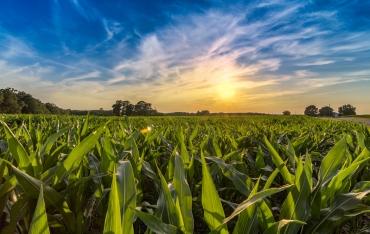 Kernels of Corn Brandon Byrge brandonbyrge 13